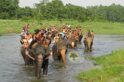 Chitwan Jungle Safari - 2 Nights / 3 Days