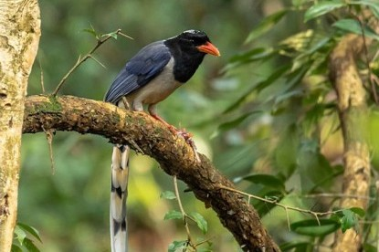 Day Tour- Bird Watching on Nagarjun Hill