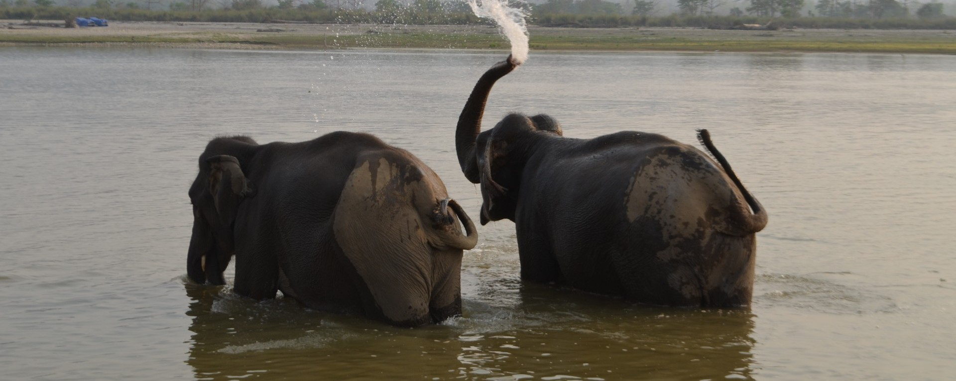 Elephant Shower at Chitwan National Park