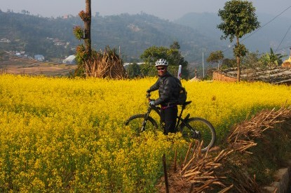 Mustard Field with Cyclist